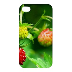 Strawberry  Apple Iphone 4/4s Premium Hardshell Case by Siebenhuehner