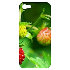 Strawberry  Apple Iphone 5 Hardshell Case by Siebenhuehner