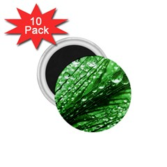 Waterdrops 1 75  Button Magnet (10 Pack) by Siebenhuehner
