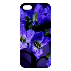 Cuckoo Flower Iphone 5 Premium Hardshell Case by Siebenhuehner