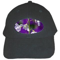 Cuckoo Flower Black Baseball Cap by Siebenhuehner