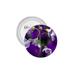 Cuckoo Flower 1 75  Button by Siebenhuehner