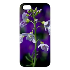Cuckoo Flower Iphone 5s Premium Hardshell Case by Siebenhuehner