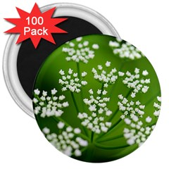 Queen Anne s Lace 3  Button Magnet (100 Pack) by Siebenhuehner