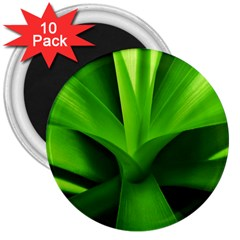 Yucca Palm  3  Button Magnet (10 Pack)
