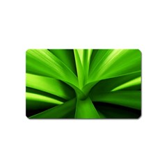Yucca Palm  Magnet (name Card) by Siebenhuehner