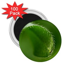 Leaf 2 25  Button Magnet (100 Pack) by Siebenhuehner