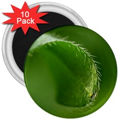 Leaf 3  Button Magnet (10 Pack) by Siebenhuehner