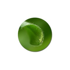 Leaf Golf Ball Marker 4 Pack by Siebenhuehner
