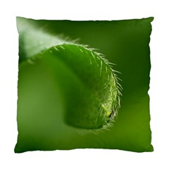 Leaf Cushion Case (single Sided)  by Siebenhuehner