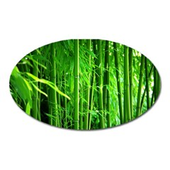 Bamboo Magnet (oval) by Siebenhuehner