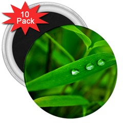 Bamboo Leaf With Drops 3  Button Magnet (10 Pack) by Siebenhuehner