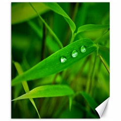 Bamboo Leaf With Drops Canvas 20  X 24  (unframed) by Siebenhuehner