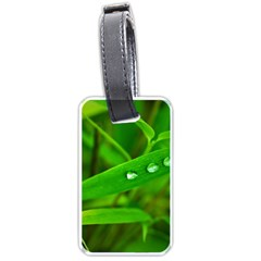 Bamboo Leaf With Drops Luggage Tag (one Side) by Siebenhuehner