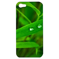 Bamboo Leaf With Drops Apple Iphone 5 Hardshell Case by Siebenhuehner