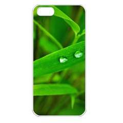 Bamboo Leaf With Drops Apple Iphone 5 Seamless Case (white) by Siebenhuehner