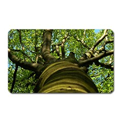 Tree Magnet (rectangular) by Siebenhuehner