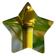 Bamboo Star Ornament by Siebenhuehner