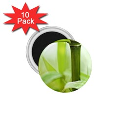 Bamboo 1 75  Button Magnet (10 Pack) by Siebenhuehner