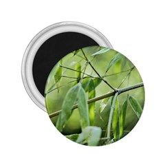 Bamboo 2 25  Button Magnet by Siebenhuehner