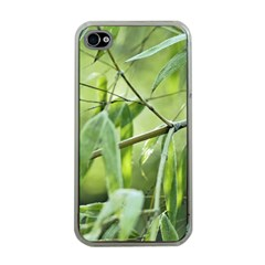 Bamboo Apple Iphone 4 Case (clear) by Siebenhuehner