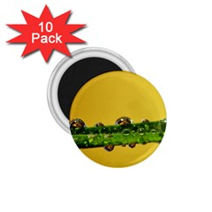 Drops 1 75  Button Magnet (10 Pack) by Siebenhuehner