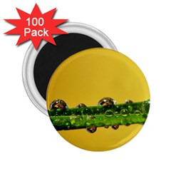 Drops 2 25  Button Magnet (100 Pack) by Siebenhuehner