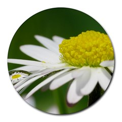 Daisy With Drops 8  Mouse Pad (round) by Siebenhuehner