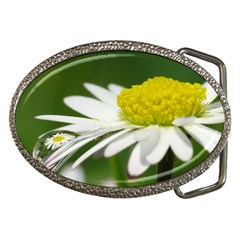 Daisy With Drops Belt Buckle (oval) by Siebenhuehner