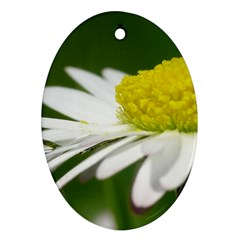Daisy With Drops Oval Ornament (two Sides) by Siebenhuehner