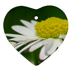 Daisy With Drops Heart Ornament (two Sides) by Siebenhuehner