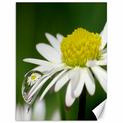 Daisy With Drops Canvas 12  X 16  (unframed) by Siebenhuehner
