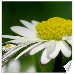 Daisy With Drops Canvas 16  X 16  (unframed) by Siebenhuehner