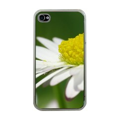 Daisy With Drops Apple Iphone 4 Case (clear) by Siebenhuehner