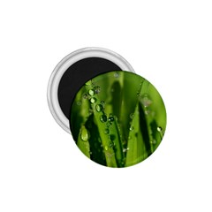 Grass Drops 1 75  Button Magnet by Siebenhuehner
