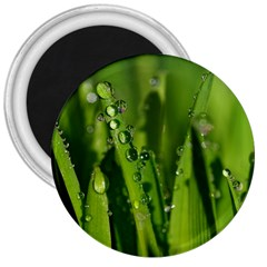 Grass Drops 3  Button Magnet by Siebenhuehner