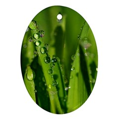 Grass Drops Oval Ornament by Siebenhuehner