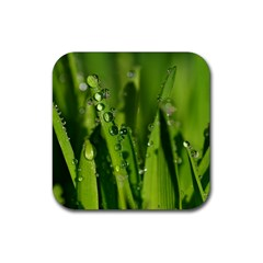 Grass Drops Drink Coasters 4 Pack (square) by Siebenhuehner