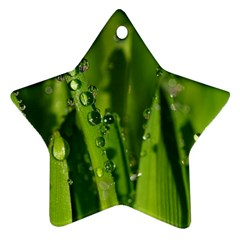 Grass Drops Star Ornament (two Sides) by Siebenhuehner