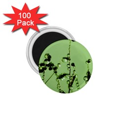 Mint Drops  1 75  Button Magnet (100 Pack) by Siebenhuehner