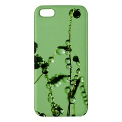 Mint Drops  Iphone 5 Premium Hardshell Case by Siebenhuehner