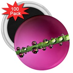Drops 3  Button Magnet (100 Pack) by Siebenhuehner