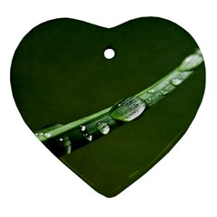Grass Drops Heart Ornament (two Sides) by Siebenhuehner