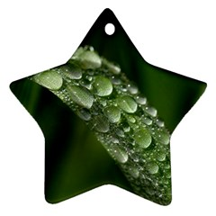 Grass Drops Star Ornament by Siebenhuehner