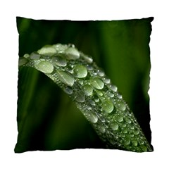 Grass Drops Cushion Case (two Sided)  by Siebenhuehner