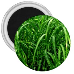 Grass 3  Button Magnet by Siebenhuehner