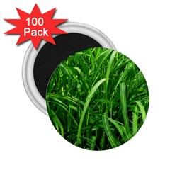 Grass 2 25  Button Magnet (100 Pack) by Siebenhuehner