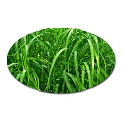 Grass Magnet (oval) by Siebenhuehner