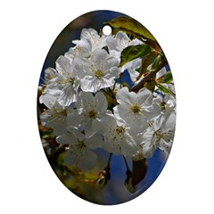 Cherry Blossom Oval Ornament (two Sides) by Siebenhuehner