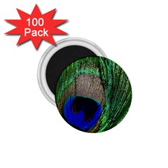 Peacock 1 75  Button Magnet (100 Pack) by Siebenhuehner